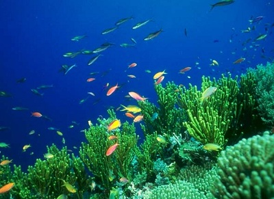 The <a