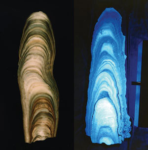 Stalagmites showing growth rings