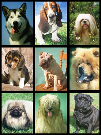 Dog Breeds An Example Of Artificial Selection Windows To The Universe