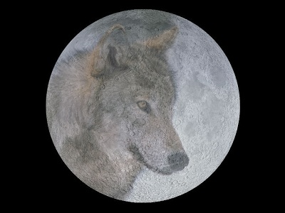 "The Full Moon in January is called the Wolf Moon. It is named after the hungry packs of wolves that howled at night.  The Algonquian tribes of Native Americans had <a href=""/earth/moon/full_moon_names.html&edu=elem"">many different names</a> for the Full Moon through the year, reflecting their connection with nature and the <a href=""/the_universe/uts/seasons1.html&edu=elem"">seasons</a>, hunting, fishing, and farming.<p><small><em>Image courtesy of Windows to the Universe</em></small></p>"