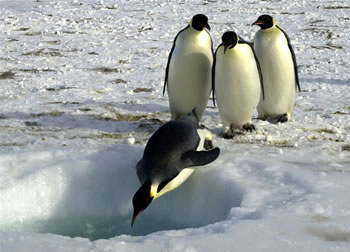 A group of