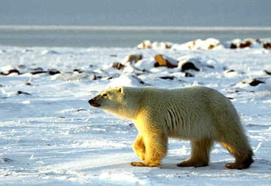 Image result for north america polar regions