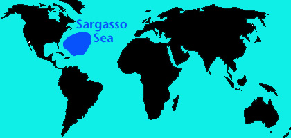 Sargasso_map.jpg