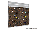 Paleoclimates and Pollen - Activity PDF