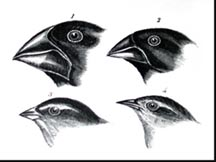 Charles Darwin Theory Of Evolution Finches Classroom Activity: Ad...